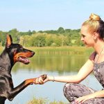 8 Tips on How to Train a Dog